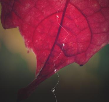 Au fil de l'eau - Le web doc des Beaujolais