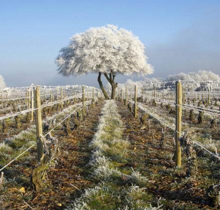 Beaujolais Nouveaux Hiver - © JB LAISSARD