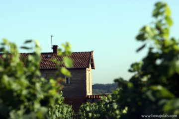 Les Beaujolais Nouveaux en images