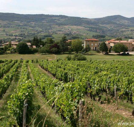 paysages beaujolais villages