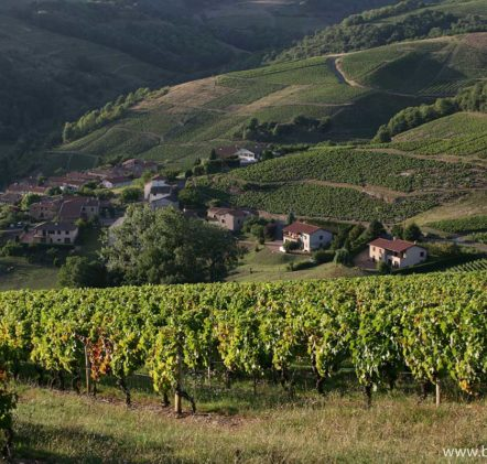 paysages beaujolais