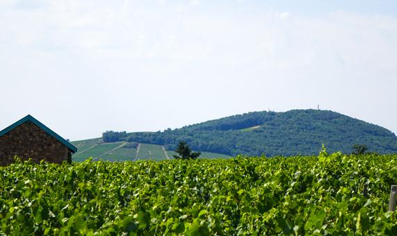 Circuit vignoble beaujolais